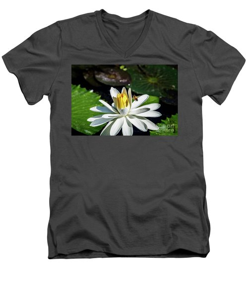 Bee In A Flower Men's V-Neck T-Shirt