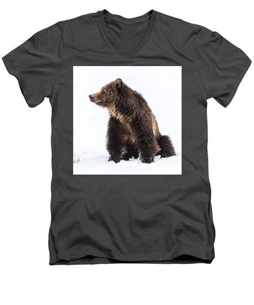 Men's V-Neck T-Shirt featuring the photograph Beryl Springs Grizzly Sow In Snow by Yeates Photography