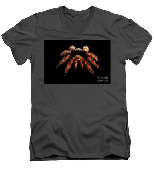 Men's V-Neck T-Shirt featuring the photograph Big Hairy Tarantula Theraphosidae Isolated On Black Background by Sergey Taran