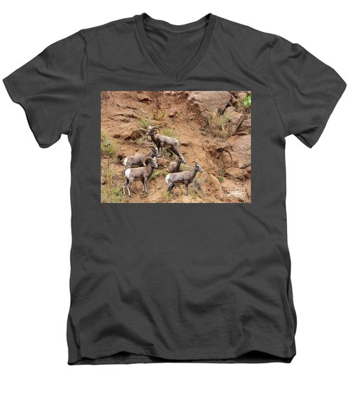 Big Horn Sheep Family Men's V-Neck T-Shirt