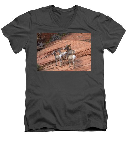 Big Horn Sheep, Zion National Park Men's V-Neck T-Shirt