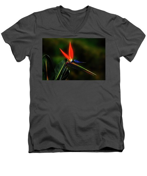 Bird Of Pardise Men's V-Neck T-Shirt by Joseph Hollingsworth