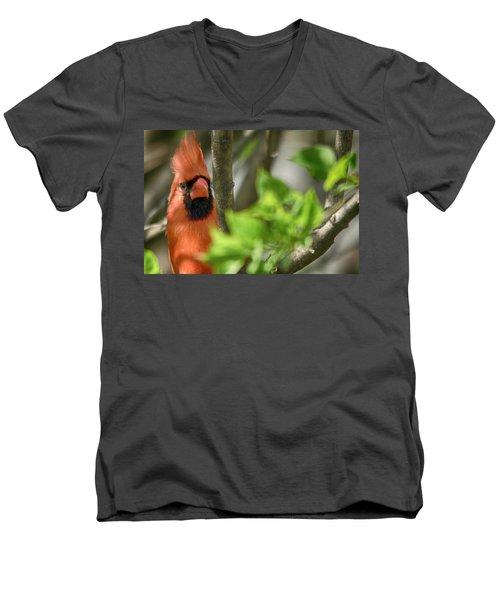 Bird's Eye Men's V-Neck T-Shirt