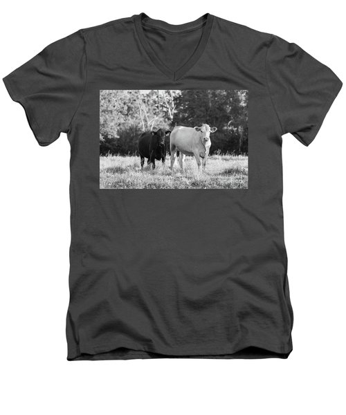 Men's V-Neck T-Shirt featuring the photograph Black And White Cows by Vincent Bonafede