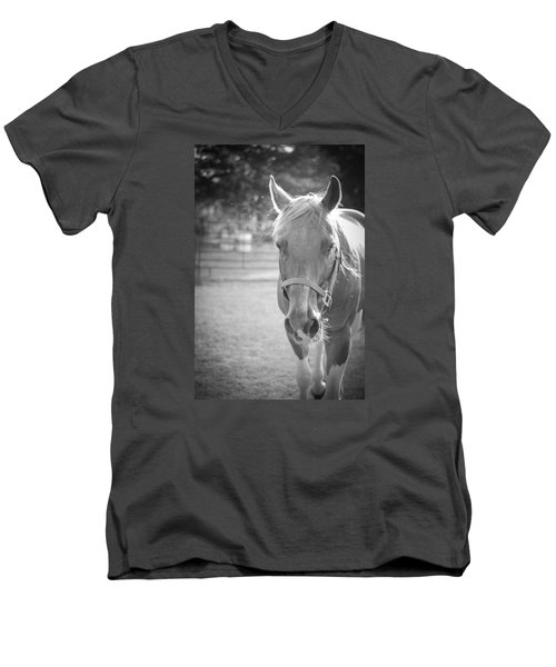 Black And White Portrait Of A Horse In The Sun Men's V-Neck T-Shirt by Kelly Hazel