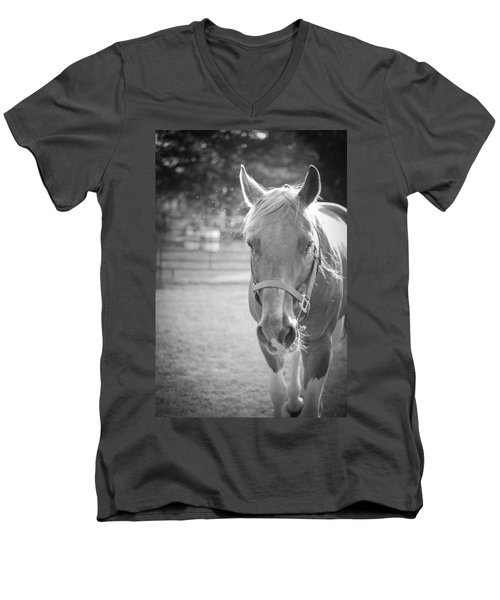 Black And White Portrait Of A Horse In The Sun Men's V-Neck T-Shirt