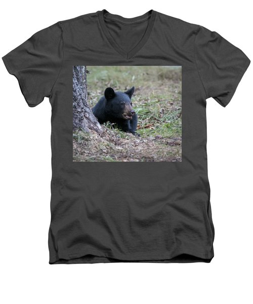 Black Bear Resting Men's V-Neck T-Shirt