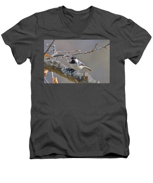 Black Capped Chickadee 1109 Men's V-Neck T-Shirt by Michael Peychich