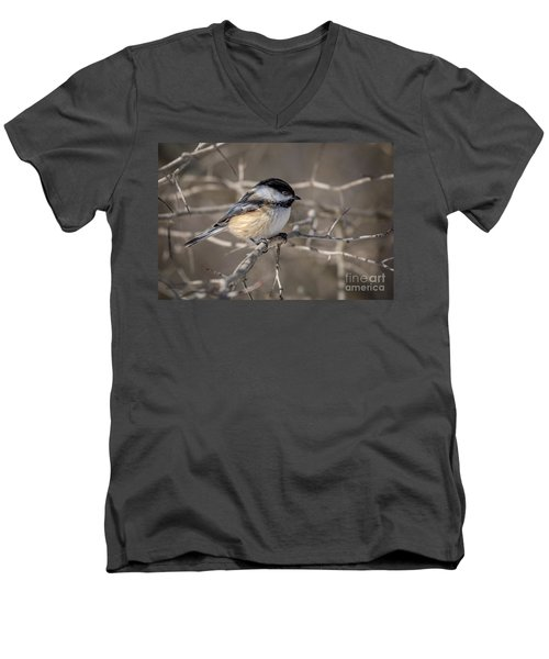 Black-capped Chickadee Iv Men's V-Neck T-Shirt