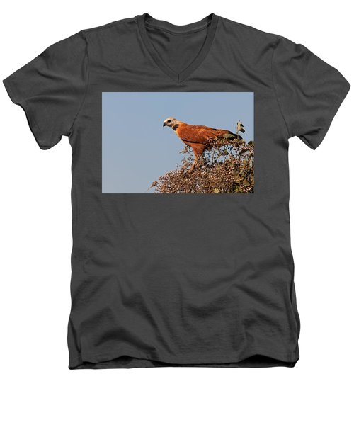 Black-collared Hawk, Pantanal Men's V-Neck T-Shirt