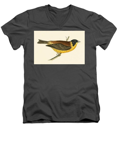 Black Headed Bunting Men's V-Neck T-Shirt