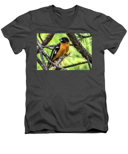 Black-headed Grosbeak Men's V-Neck T-Shirt