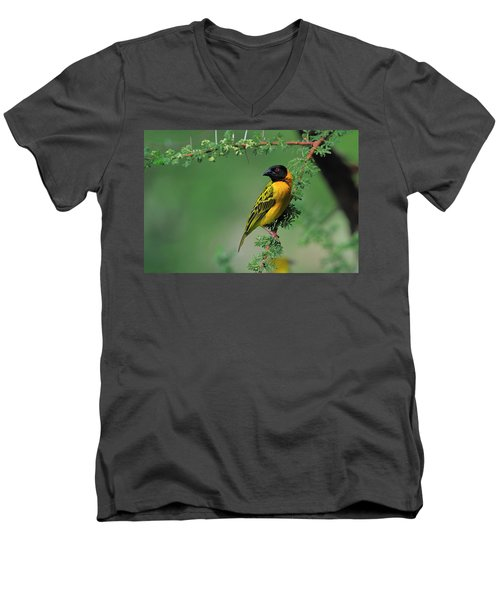 Black-headed Weaver Men's V-Neck T-Shirt