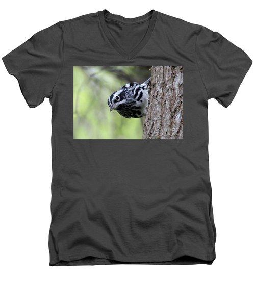 Black-n-white Warbler Men's V-Neck T-Shirt
