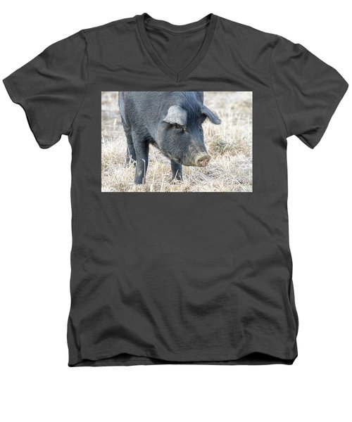 Men's V-Neck T-Shirt featuring the photograph Black Pig Close-up by James BO Insogna