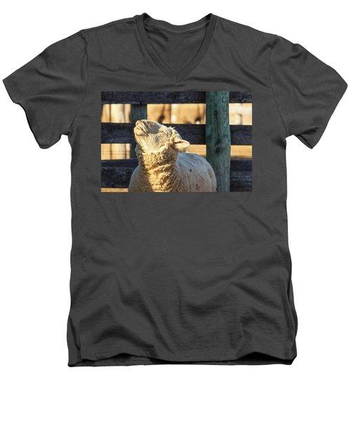 Bleating Sheep Men's V-Neck T-Shirt