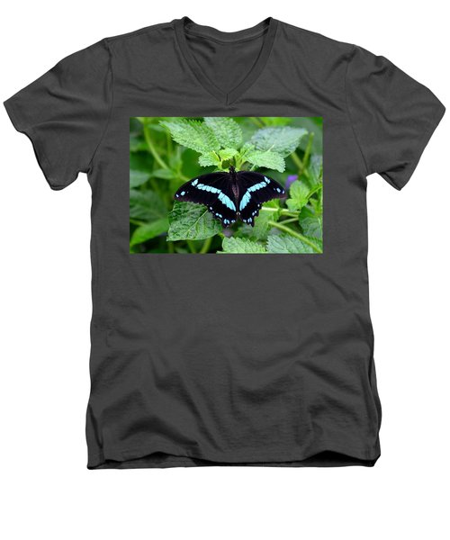 Blue Banded Swallowtail Butterfly Men's V-Neck T-Shirt