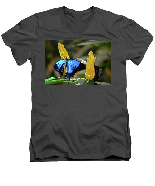 Blue Beauty Butterfly Men's V-Neck T-Shirt
