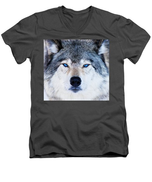 Men's V-Neck T-Shirt featuring the photograph Blue Eyed Wolf Portrait by Mircea Costina Photography