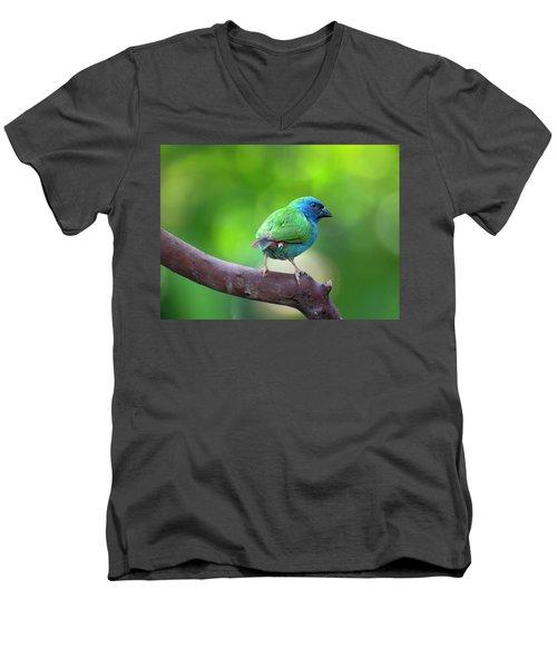 Blue-faced Parrotfinch Men's V-Neck T-Shirt