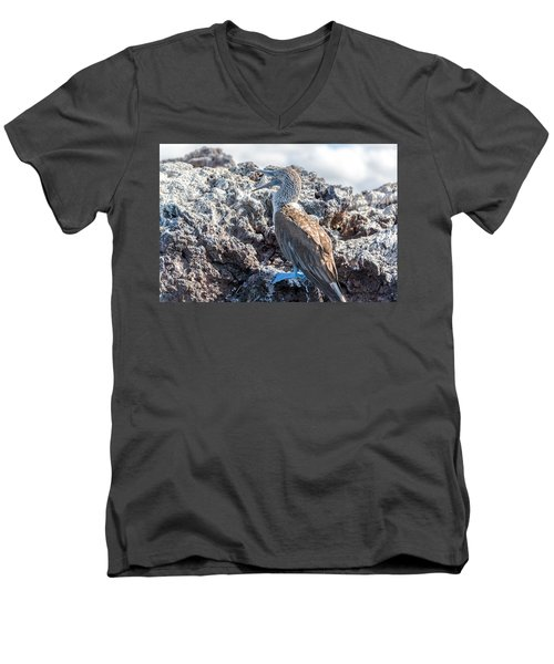 Blue Footed Booby Men's V-Neck T-Shirt by Jess Kraft