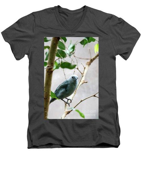 Blue-grey Tanager 2 Men's V-Neck T-Shirt
