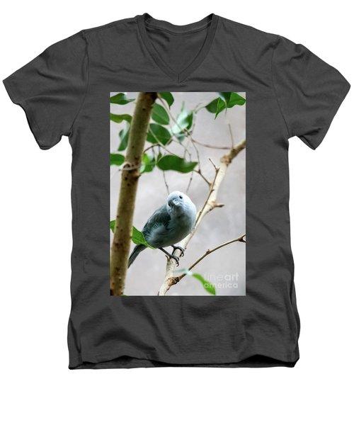 Blue-grey Tanager Men's V-Neck T-Shirt
