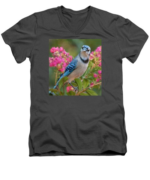 Blue Jay In Crepe Myrtle Men's V-Neck T-Shirt by Jim Moore