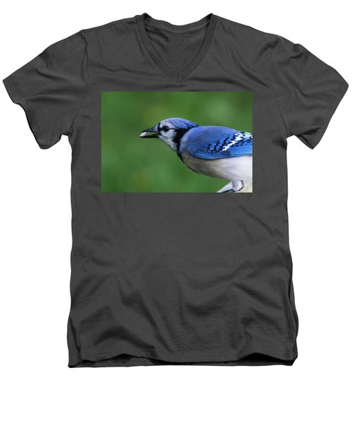 Blue Jay With Seed Men's V-Neck T-Shirt