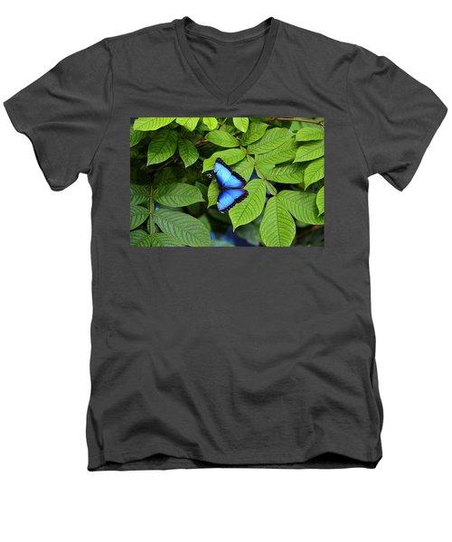 Blue Leaves - Morpho Butterfly Men's V-Neck T-Shirt