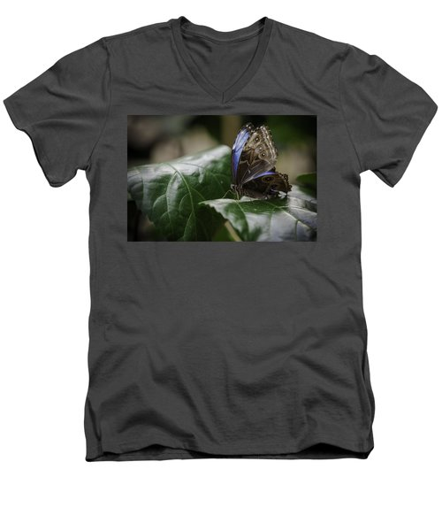 Men's V-Neck T-Shirt featuring the photograph Blue Morpho On A Leaf by Jason Moynihan