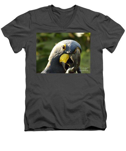 Blue Parrot Men's V-Neck T-Shirt