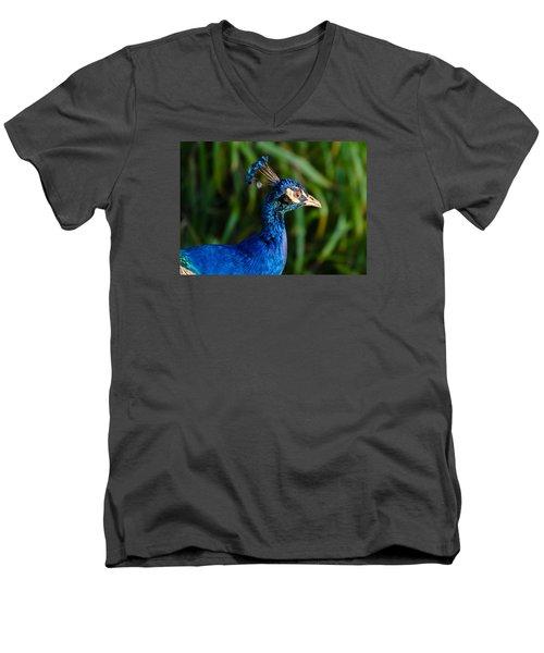 Blue Peacock Men's V-Neck T-Shirt by Daniel Precht