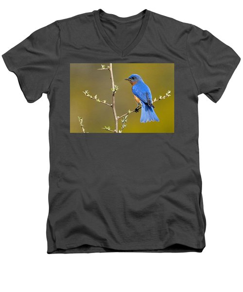 Bluebird Bliss Men's V-Neck T-Shirt