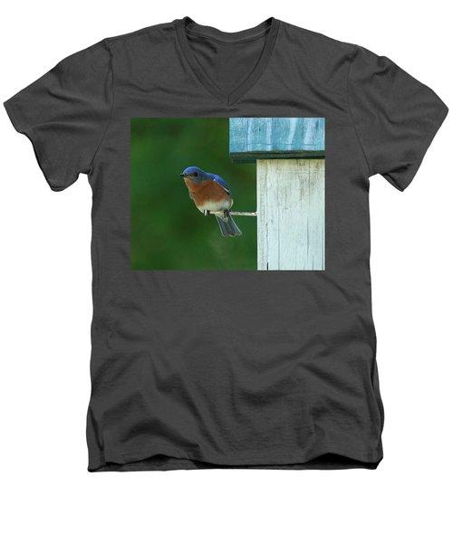 Bluebird Men's V-Neck T-Shirt by Douglas Stucky