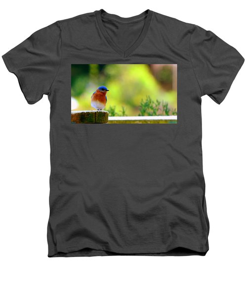 Bluebird Men's V-Neck T-Shirt
