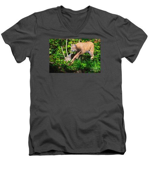 Bobcat At Water's Edge Men's V-Neck T-Shirt by Ansel Price
