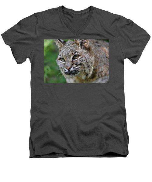 Bobcat In The Trees Men's V-Neck T-Shirt