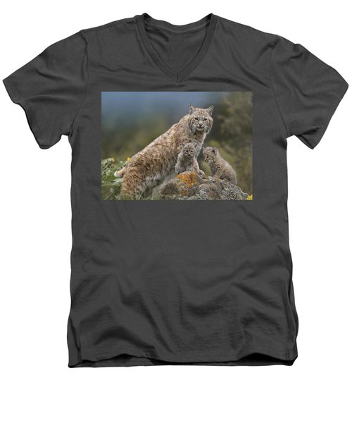 Bobcat Mother And Kittens North America Men's V-Neck T-Shirt