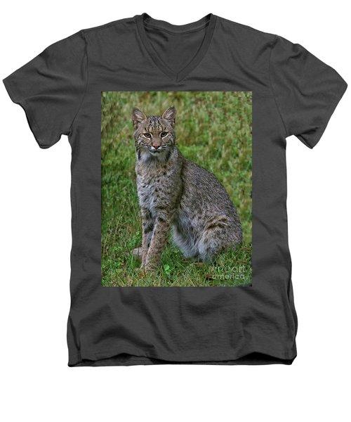 Bobcat On Alert Men's V-Neck T-Shirt by Myrna Bradshaw
