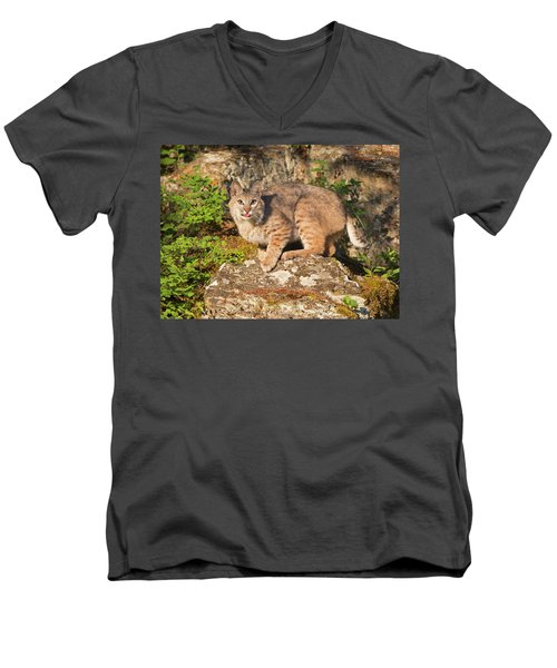 Bobcat On Rock With Tongue Out Men's V-Neck T-Shirt