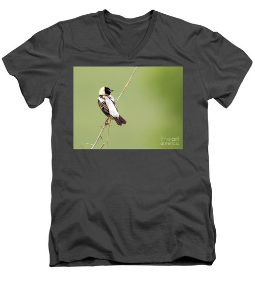 Men's V-Neck T-Shirt featuring the photograph Bobolink Looking At You by Ricky L Jones