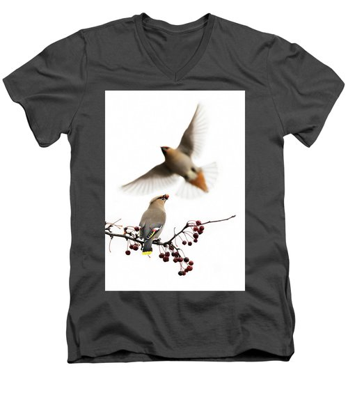 Men's V-Neck T-Shirt featuring the photograph Bohemian Waxwings by Mircea Costina Photography