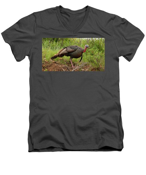 Bold Turkey Men's V-Neck T-Shirt