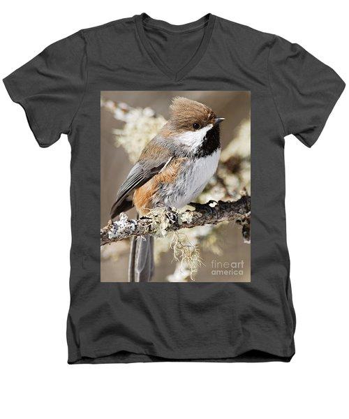 Boreal Chickadee Men's V-Neck T-Shirt