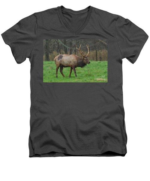 Boxley Elk Men's V-Neck T-Shirt