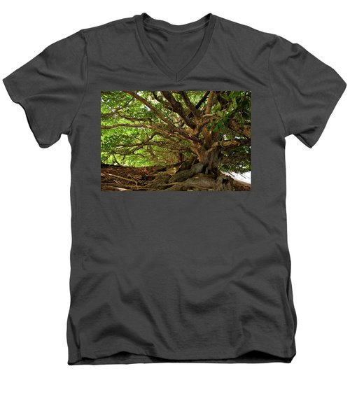 Branches And Roots Men's V-Neck T-Shirt by James Eddy