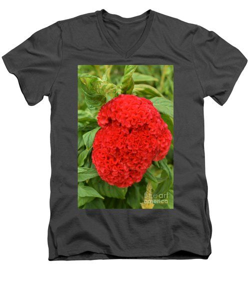 Bright Red Cockscomb Men's V-Neck T-Shirt