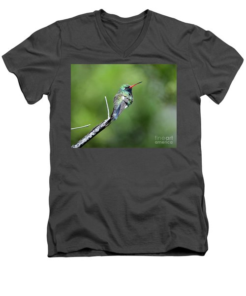 Broad-billed Hummingbird Men's V-Neck T-Shirt