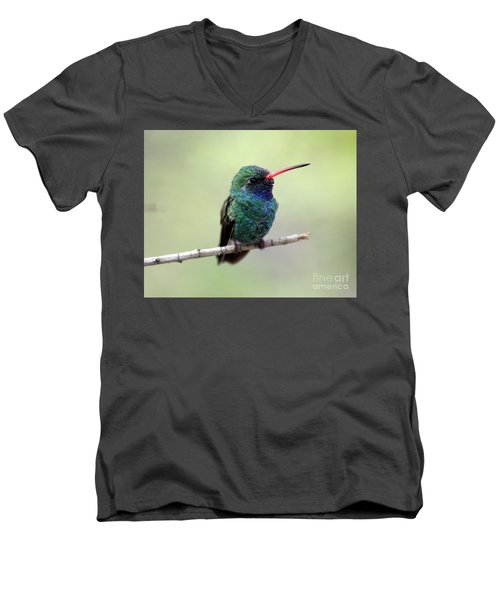 Broad-billed Hummingbird Portrait Men's V-Neck T-Shirt